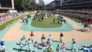 東京競馬場で競走馬の撮影に挑戦してみた【パドック編】地下馬道とウィナーズサークルも・・・