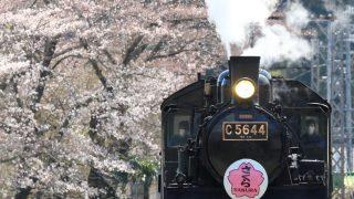 大井川鐡道、サクラ臨時列車を撮影する 【家山編】
