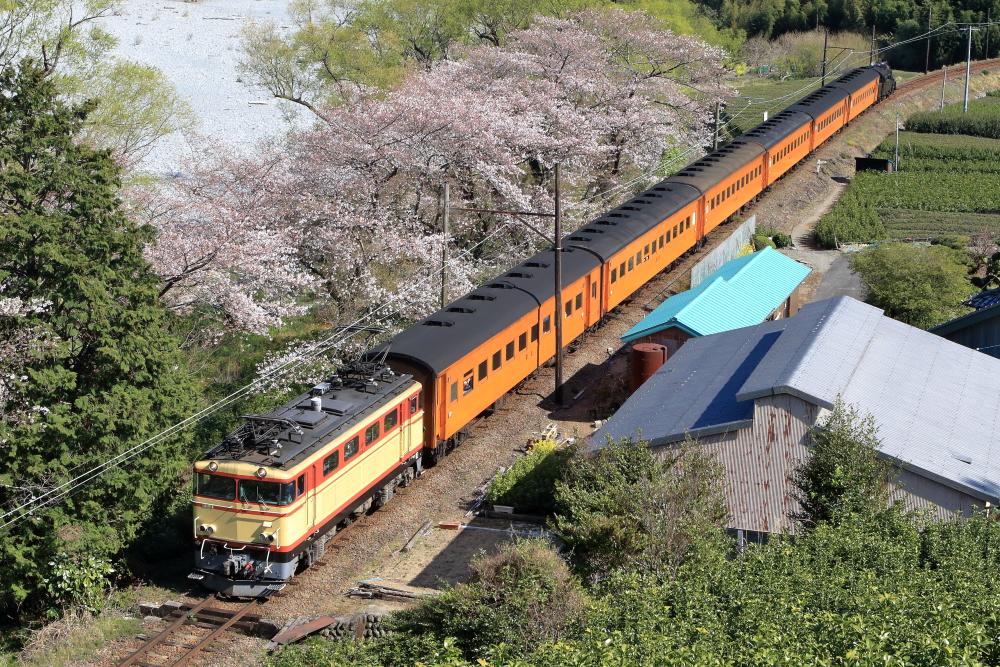 大井川鐡道、サクラ臨時列車を撮影する 【大和田編】