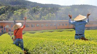 令和初撮り!!茶摘みシーズンに大井川鐵道で撮影する【崎平編】
