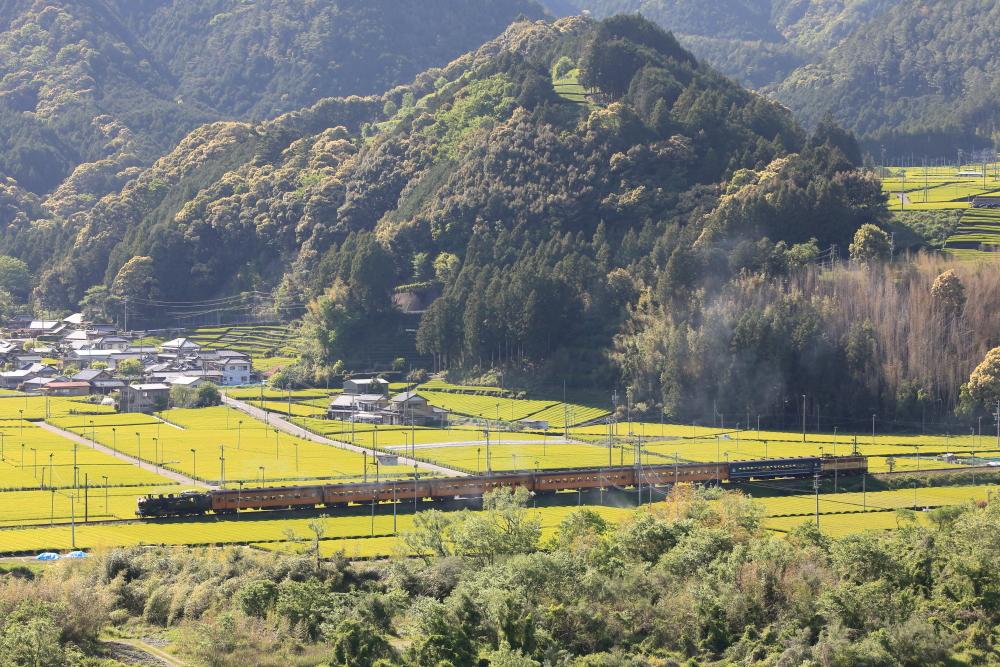令和初撮り!!茶摘みシーズンに大井川鐵道で撮影する【抜里編】